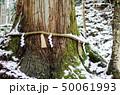 雪と巨木 50061993