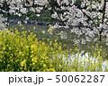 桜 菜の花 花筏の写真 50062287