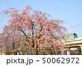 枝垂れ桜と東京メトロ千代田線05系電車 50062972