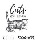 動物 ねこ ネコのイラスト 50064035