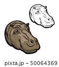 かば カバ 動物のイラスト 50064369