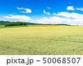 《北海道》美瑛の丘・田園風景パッチワークの路 50068507