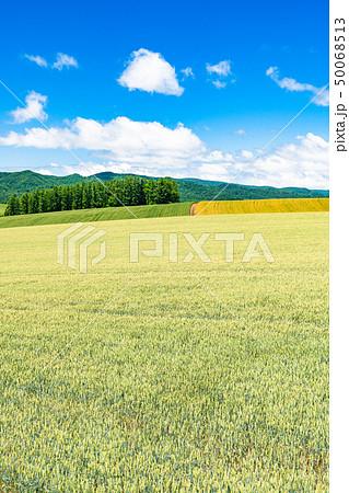 《北海道》美瑛の丘・田園風景パッチワークの路 50068513