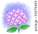 紫陽花 花 植物のイラスト 50070463