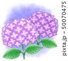 紫陽花 花 植物のイラスト 50070475