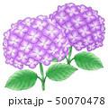 青紫系デュオ 50070478
