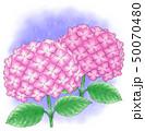 アジサイ赤紫系デュオ・雨降り 50070480
