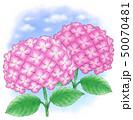 アジサイ赤紫系デュオ・青空 50070481