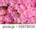 ツツジ 花 ピンクの写真 50078030