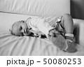 女児 子供 横たわるの写真 50080253