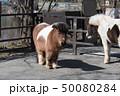 ポニー 馬 動物園 50080284