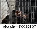 マレーグマ クマ 爪 熊 50080307