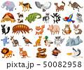動物 キャラクター 文字のイラスト 50082958