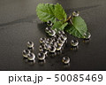 Fresh mint leaf on a table with transparent jelly 50085469