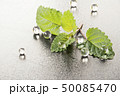 Fresh mint leaf on a table with transparent jelly 50085470