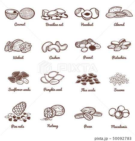 Edible nuts and seeds vector icons. Protein healthy food set 50092783