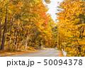 森林 林 森の写真 50094378