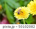 蒲公英と蜜蜂 50102082
