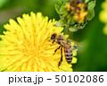蒲公英と蜜蜂 50102086