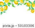 レモン フルーツ 葉のイラスト 50103306