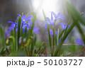 花 フラワー 植物の写真 50103727