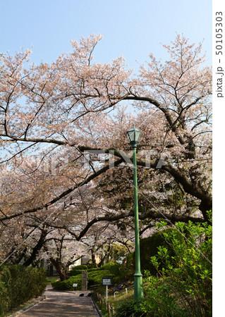 横浜・山手公園 50105303