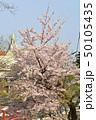 横浜・山手公園 50105435