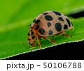 昆虫 虫 蟲の写真 50106788