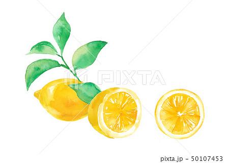 レモンと葉 3パターン 50107453