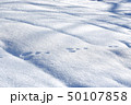 朝の雪面 雪面 50107858