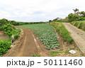 畑 花 緑色の写真 50111460