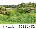 畑 ビニールハウス 緑色の写真 50111462