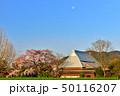 宝殊寺のしだれ桜 50116207