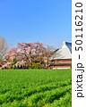 宝殊寺のしだれ桜 50116210