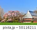 宝殊寺のしだれ桜 50116211