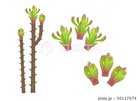 タラの芽 50117074