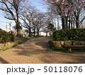 公園の桜 50118076