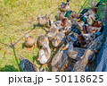 鳥 鴨 群れの写真 50118625