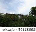 薔薇の森と青空 50118668