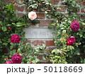 薔薇とレンガ 50118669