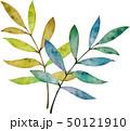 葉 葉っぱ 水彩のイラスト 50121910