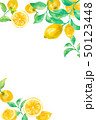 レモン フルーツ フレームのイラスト 50123448