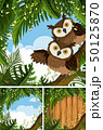 森林 林 森のイラスト 50125870