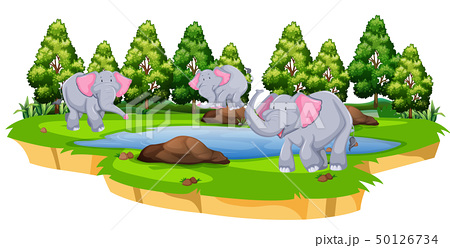 Group of elephant in nature 50126734