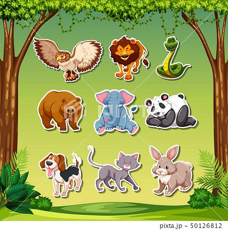 Set of animal sticker 50126812