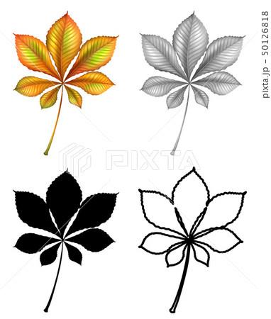 Set of plant Leaf 50126818