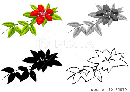 Set of hibiscus flower 50126830