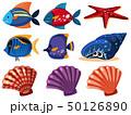 サカナ 魚 魚類のイラスト 50126890