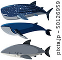 Three different types of sharks 50126959