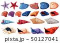 ホワイト 白 貝殻のイラスト 50127041